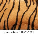 Structure Of A Skin Of A Tiger...