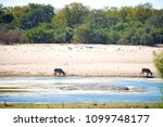 blur in south africa    kruger  ... | Shutterstock . vector #1099748177