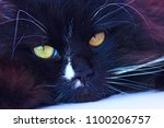 muzzle of black cat close up... | Shutterstock . vector #1100206757
