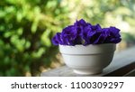 A Cup Full Of Butterfly Pea ...