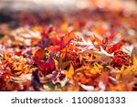 maple leafs colorful japan | Shutterstock . vector #1100801333