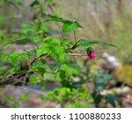 saltwater state park in des... | Shutterstock . vector #1100880233