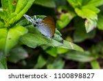 fluffy tit butterfly.  ... | Shutterstock . vector #1100898827