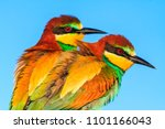 pair of wild beautiful birds | Shutterstock . vector #1101166043