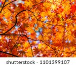 abstract nature background.... | Shutterstock . vector #1101399107