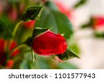bright buds of colorful wild... | Shutterstock . vector #1101577943