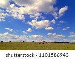rural landscape on the field in ...   Shutterstock . vector #1101586943