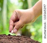Male Hand Seeding Peanut Close...