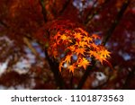 autumn is one of the most... | Shutterstock . vector #1101873563