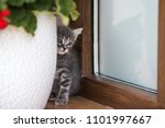 cat portrait in color | Shutterstock . vector #1101997667