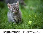 cat portrait in color | Shutterstock . vector #1101997673