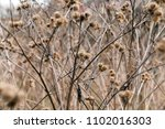 a dim photo with a dry old... | Shutterstock . vector #1102016303