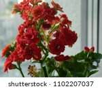 home decorative potted plant  ...   Shutterstock . vector #1102207037