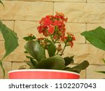 home decorative potted plant  ...   Shutterstock . vector #1102207043