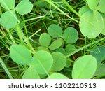 grass. clover. vegetable...   Shutterstock . vector #1102210913