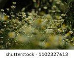 warm light chamomile flower... | Shutterstock . vector #1102327613