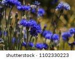 close up beautiful blue... | Shutterstock . vector #1102330223