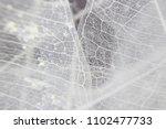 macro structure white delicate... | Shutterstock . vector #1102477733
