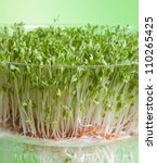 Garden cress sprouts for a healthy diet - stock photo