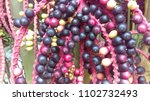 palm tree pods | Shutterstock . vector #1102732493