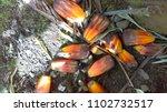 palm tree pods | Shutterstock . vector #1102732517