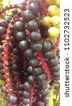 palm tree pods | Shutterstock . vector #1102732523