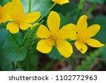 incredibly beautiful yellow... | Shutterstock . vector #1102772963