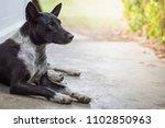 The Female Dog Black And White...