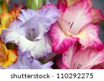 colorful bouquet of gladioli - stock photo