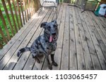 cute dog puppy tongue out funny ... | Shutterstock . vector #1103065457