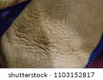close up macro leather texture... | Shutterstock . vector #1103152817