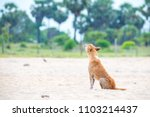 Small photo of Dogs howl in Sri Lanka