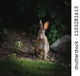 rabbit sitting in the forest.... | Shutterstock . vector #1103281613