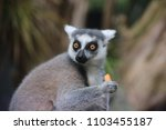 australian wildlife attractions | Shutterstock . vector #1103455187