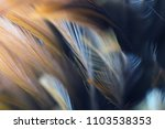 bird and chickens feather... | Shutterstock . vector #1103538353