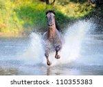Free Horse Runs Trough The...