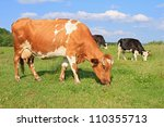 cows on a summer pasture | Shutterstock . vector #110355713
