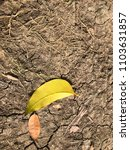 Small photo of Yellow leave and brown leave is on ground without rainless