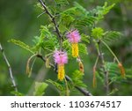pretty pink and yellow flowers... | Shutterstock . vector #1103674517