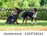 german shepherd dog fighting... | Shutterstock . vector #1103728163