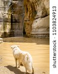 Small photo of dog staring at a waterfall in the desert. Negev, Israel
