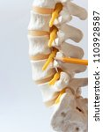 a pencil pointing at lumbar... | Shutterstock . vector #1103928587