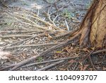 the root is the organ of a... | Shutterstock . vector #1104093707