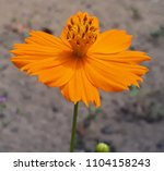 close up view of the cosmos...   Shutterstock . vector #1104158243