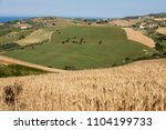 view of olive groves on... | Shutterstock . vector #1104199733