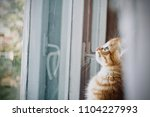 the kitten is hidden  the red... | Shutterstock . vector #1104227993