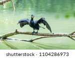 cormoran sitting on a piece of...   Shutterstock . vector #1104286973