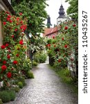 Wonderful Alley Of Roses In Th...