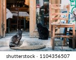 Two Cats Standing Outside A...