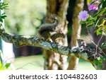 wonders of the brazilian fauna   Shutterstock . vector #1104482603